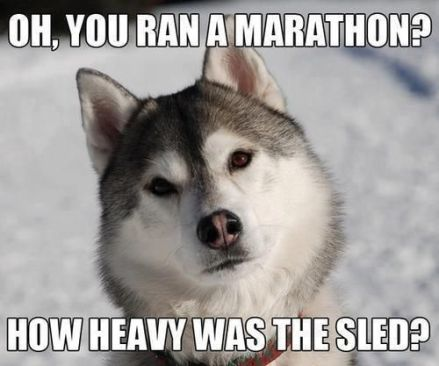 595c6092dc67abebcf0d22738b4ceb42-sled-dogs-siberian-huskies